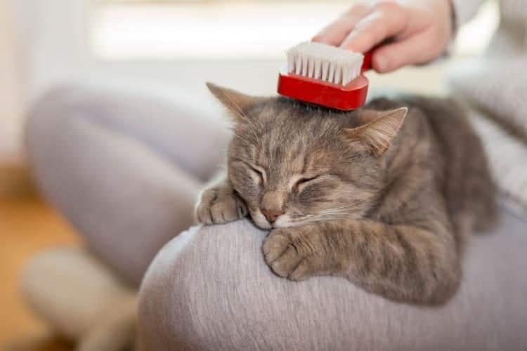 Die besten Katzenbürsten zum Verschütten (2020 Bewertungen)