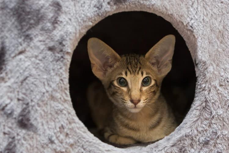 Die besten Katzen-Eigentumswohnungen (2020 Bewertungen)