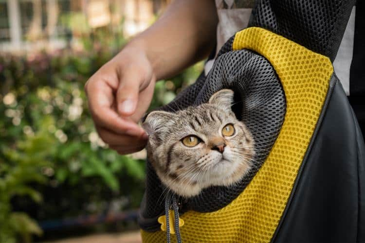 Die besten Katzenrucksäcke (2020 Bewertungen)