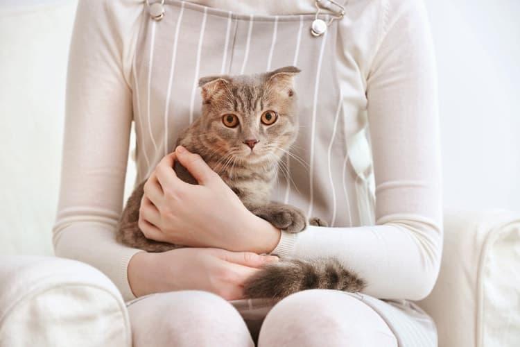 Die besten Katzenpheromonsprays (2020 Bewertungen)