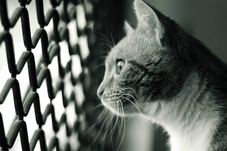 Die besten Katzenlaufgitter (2020 Bewertungen)