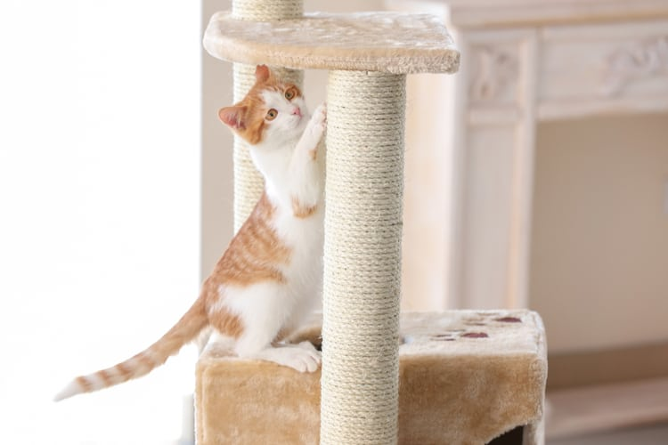 Die besten Katzenkratzer (2020 Bewertungen)
