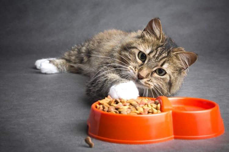 Die besten trockenen Katzenfutter (2020 Bewertungen)