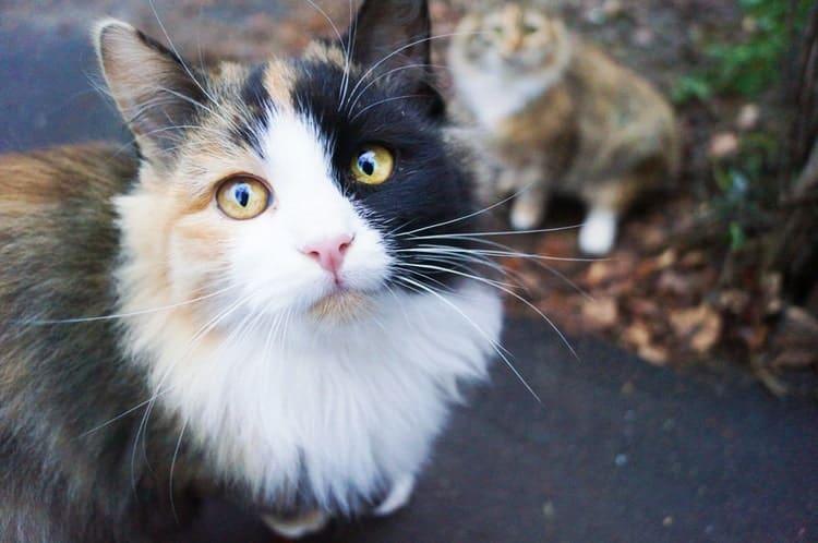 Die besten Flohbehandlungen für Katzen (2020 Reviews)
