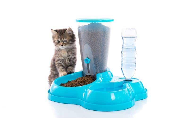 Die besten automatischen Katzenfütterer (2020 Bewertungen)