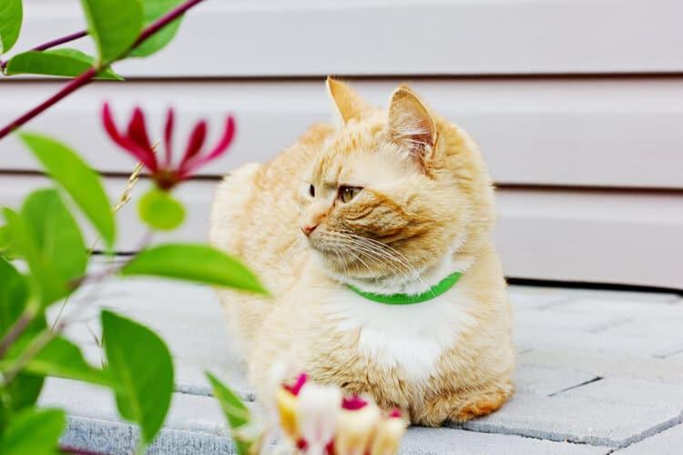 Die besten Kragen zur Beruhigung von Katzen (2020 Bewertungen)