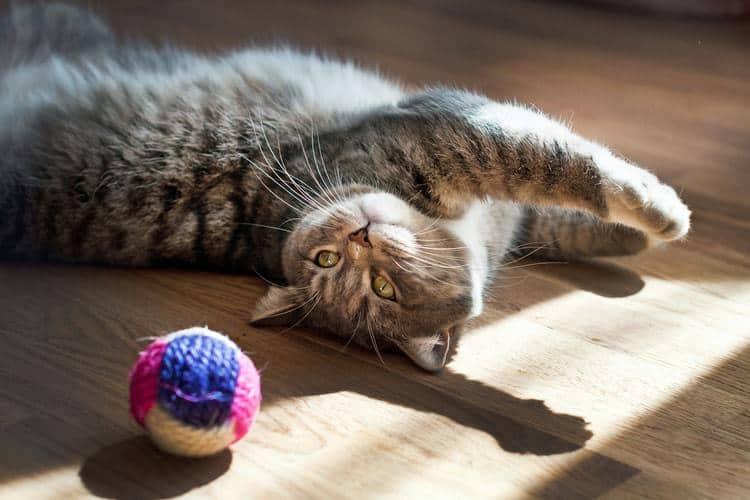 Das beste Katzenspielzeug (2020 Bewertungen)