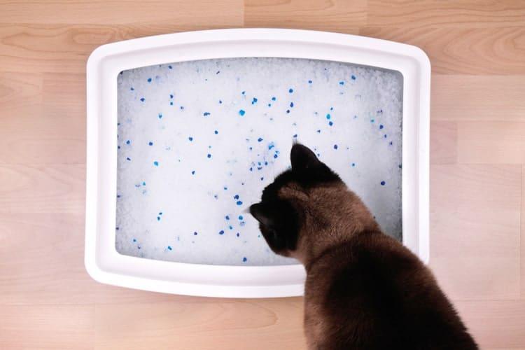 Die besten Kristallkatzenstreu (2020 Bewertungen)