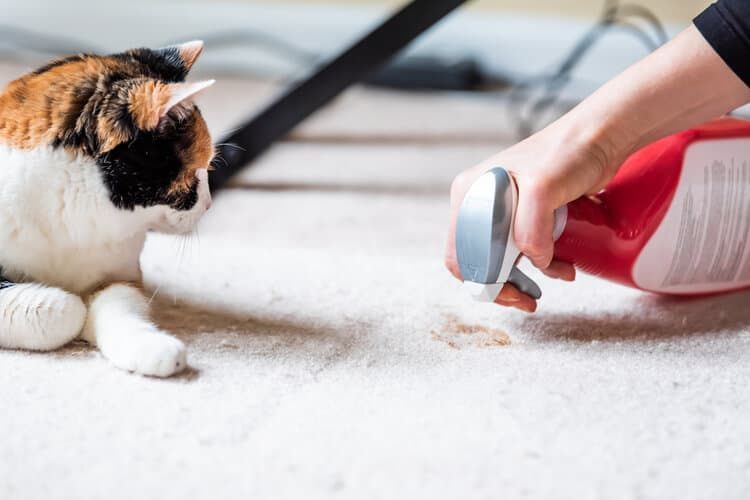 Die besten Teppichreiniger für Haustiere (2020 Bewertungen)