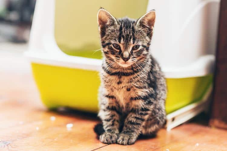 Die besten Katzentoilettenmöbel (2020 Bewertungen)