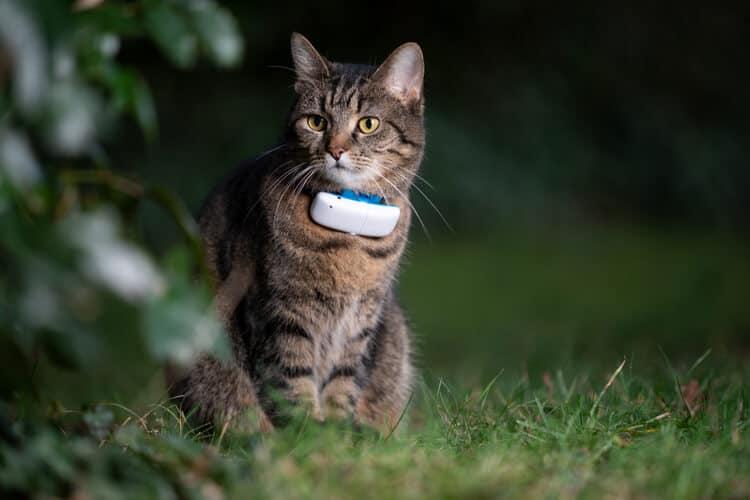 Die besten Cat GPS Tracker und Halsbänder (2020 Bewertungen)