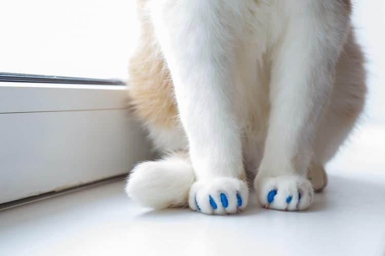 Die besten Katzennagelkappen (2020 Bewertungen)