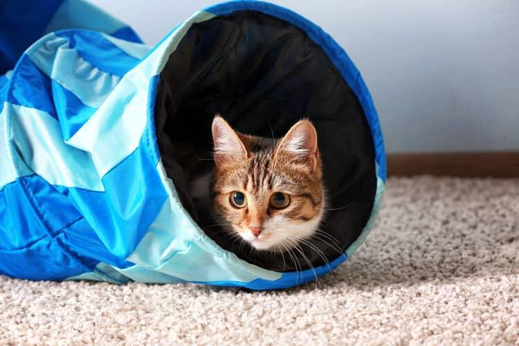 Die besten Katzentunnel (2020 Bewertungen)