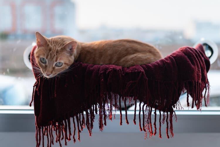 Die besten Katzenfenster-Hängematten (2020 Bewertungen)