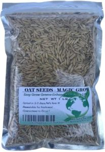 Rex Products Sweet Oat Grass