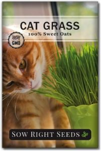 Sow Right Seeds Oat Grass