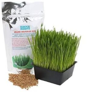 Back to Roots Wheatgrass