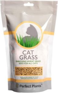 Perfect Plants Wheatgrass Seed