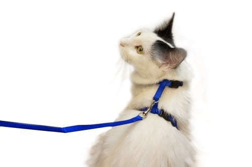 Juvale Cat Harness