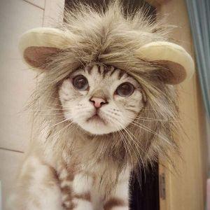 Namsan Cat Lion Costume