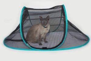 Nala and Company - The Cat House
