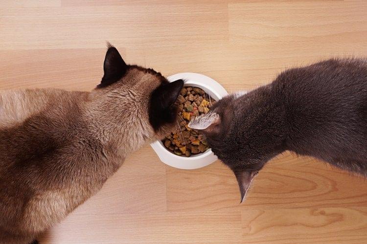 Das beste Katzenfutter für Hauskatzen (2020 Bewertungen)