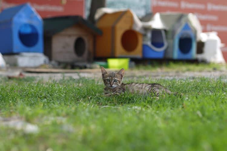 Die besten Outdoor-Katzenhäuser (2020 Bewertungen)